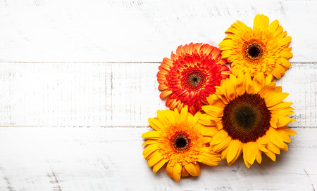 Beautiful yellow sunflowers and gerbera  on the white wooden background. Top view with copy space. Banco de Imagens
