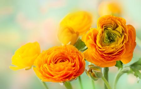 Arreglo floral con flores de ranúnculo amarillo.