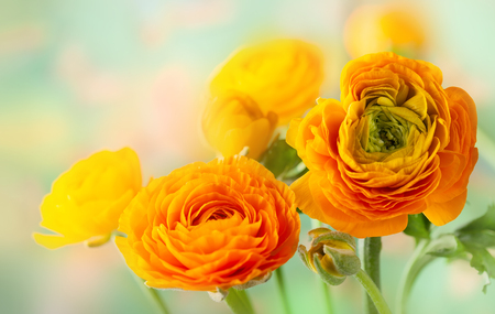 Floral arrangement with yellow ranunculus flowers.
