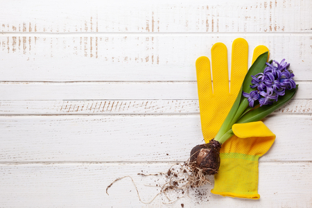 Gardening concept  with spring flowers, garden tools,work gloves and flower pots on wooden background. Flat lay, copy space. 스톡 콘텐츠