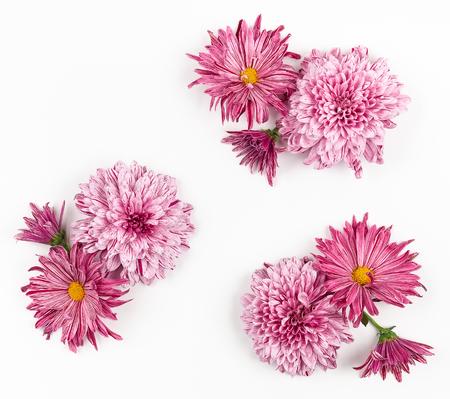 Schöne rosa Blumen auf weißem Hintergrund.