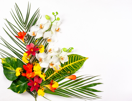 Tropical leaves and exotic flowers on white background.