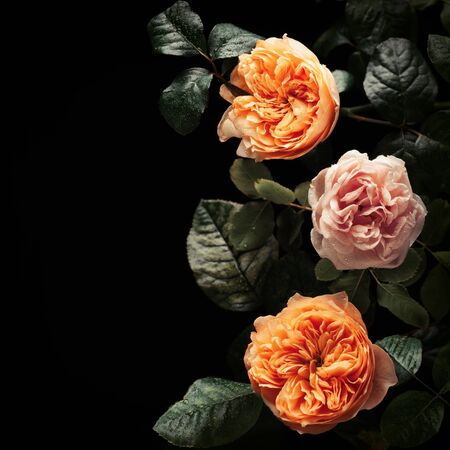 Beautiful bunch of colorful roses flowers on black  in vintage style. Festive flowers concept. Imagens - 125277383