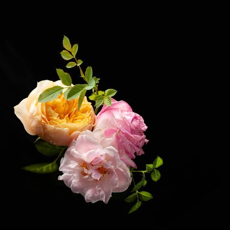 Beautiful bunch of colorful roses flowers on black Imagens - 126364436