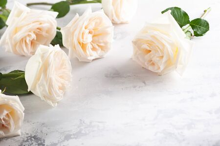 Beautiful fresh white roses flowers on vintage background. Festive floral background.