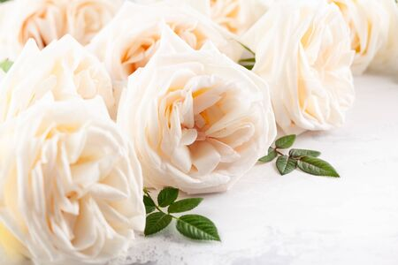 Beautiful fresh white roses flowers on vintage background. Festive floral background. Imagens - 126492097