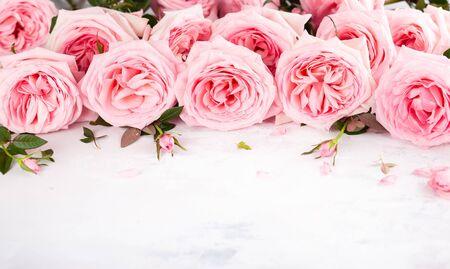 Beautiful fresh  pink roses flowers on vintage background. Festive floral background. Imagens