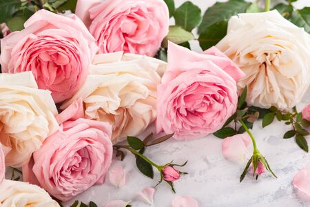 Beautiful fresh  pink and white roses on vintage background. Festive floral background. Imagens