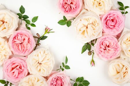 Beautiful fresh  pink and white roses on white background. Festive floral background. Top view with copy space. Imagens