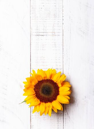 Beautiful yellow sunflowers on the white wooden background. Top view with copy space.