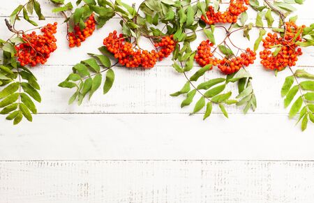 Autumn concept with leaves and  rowan berries on a white rustic