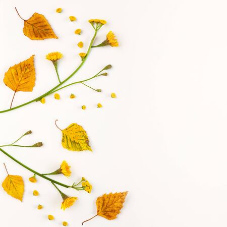 Autumn composition with autumn dried leaves and  flowers on white