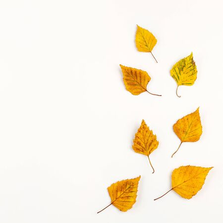 Autumn composition with autumn dried leaves on white Imagens