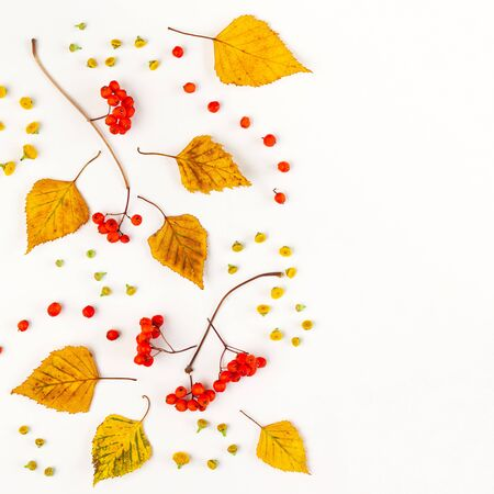 Autumn composition with autumn dried leaves, berries and flowers on white Imagens