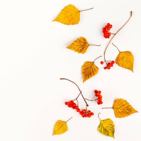 Autumn composition with autumn dried leaves and rowan berries  on white background. Flat lay, copy space.