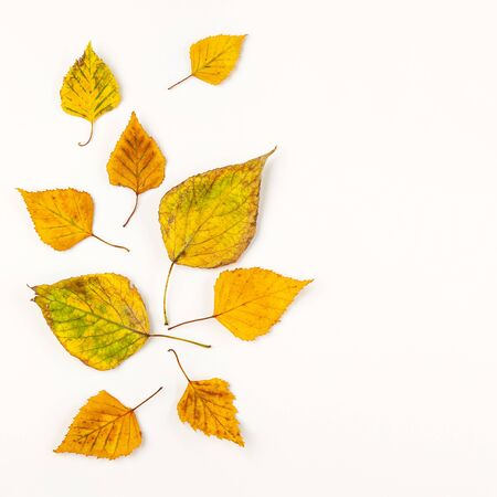 Autumn composition with autumn dried leaves on white background. Flat lay, copy space. Imagens