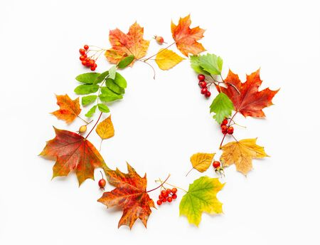 Autumn wreath made of leaves, berries on white background. Autumn composition for Thanksgiving day or for other holidays. Flat lay,  copy space.