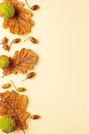 Autumn composition with autumn dried leaves of oak tree, acorn and chestnut on pastel background. Flat lay, copy space. Imagens