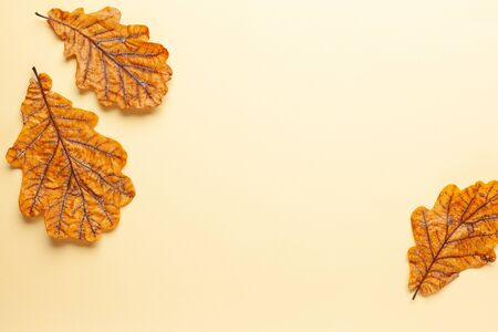 Autumn composition with autumn dried leaves of oak tree on pastel background. Flat lay, copy space.