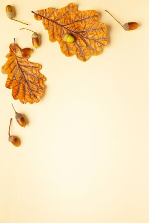 Autumn composition with autumn dried leaves of oak tree and acorn on pastel background. Flat lay, copy space.