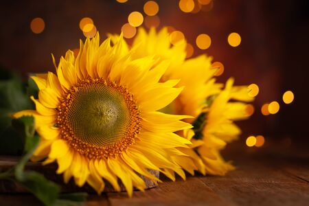Beautiful yellow Sunflowers on wooden table at festive bokeh background. Autumn festive still life. Imagens