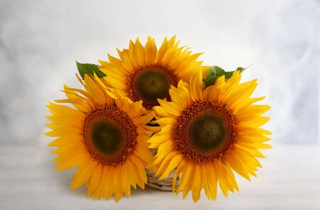Autumn still life with sunflowers in basket. Autumn arrangement with flowers on a white wooden table.