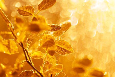 Hojas de otoño con gotas de agua y telaraña al atardecer sobre fondo borroso. Enfoque suave, macro Foto de archivo