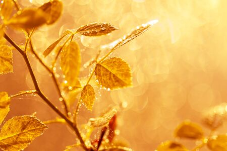 Autumn leaves with water drops and spider web at sunset over blurred background. Soft focus, macro Imagens