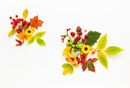 Autumn composition made of flowers,leaves, berries on white background. Autumn concept for Thanksgiving day or for other holidays. Flat lay,  copy space.