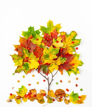 Creative autumn concept. Tree shape made with autumn leaves on white background.  Flat lay.