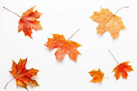 Autumn composition with maple leaves on white background. Autumn leaves background.  Flat lay, copy space. Imagens
