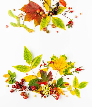 Autumn composition made of leaves, berries on white background. Autumn concept for Thanksgiving day or for other holidays. Flat lay. copy spase 写真素材 - 129395455