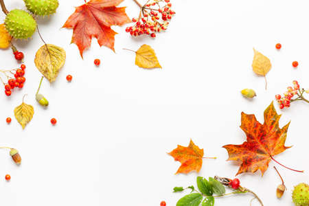 Autumn composition made of leaves, berries on white background. Autumn concept for Thanksgiving day or for other holidays. Flat lay, copy space.