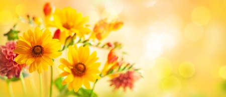 Beautiful autumn flowers on yellow blurred background. Dahlia, daisy, sunflowers. Panorama, banner with copy space Foto de archivo