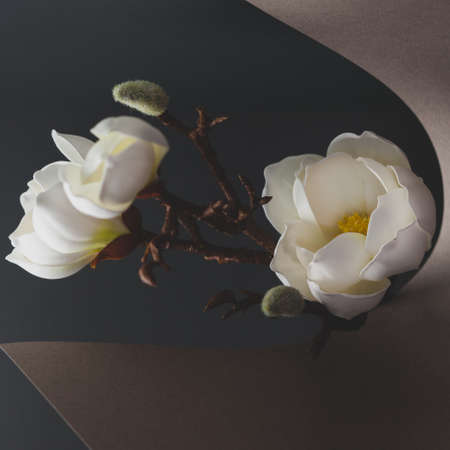 Still life with white magnolia, paper and dried branch of tree on dark background. Trendy nature concept. Standard-Bild