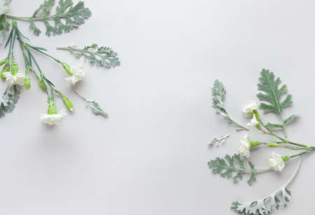 White flowers of Carnation and silver-green leaves of Senecio cineraria on pastel gray background. Flowers composition with copy space, flat lay