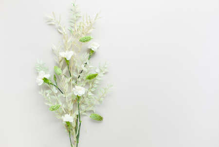 Flower composition made of dried light-green leaves of ruscus and white flowers on pastel gray background. Nature concept, copy space, flat lay.