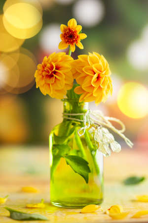 Autumn floral bouquet made of fresh yellow dahlia in green vase on blurred green background with festive bokeh.