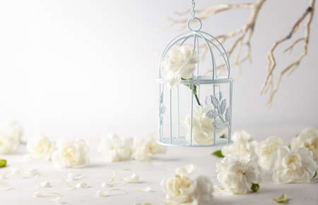 Still life with white flowers in bird cage on light backdrop. Creative concept for celebration of mother day, birthday, wedding or Valentines day Standard-Bild