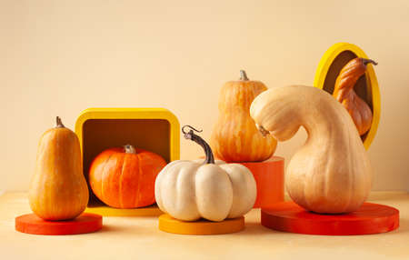 Modern still life with different sort of pumpkins on colorful podiums. Autumn concept with food and geometric objects on pastel background with copy space. 写真素材