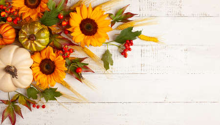 Concept of fall harvest or Thanksgiving day. Autumn composition with pumpkins, wheat ears and sunflowers on white wooden table. Flat lay, copy space