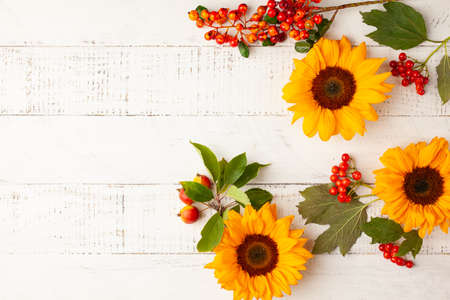 Autumn composition with sunflowers, leaves and berries on white wooden table. Flat lay, copy space. Concept of fall harvest or Thanksgiving day.