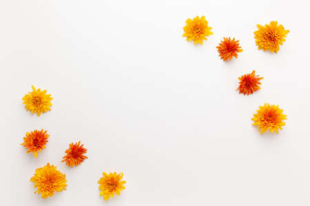 Autumn composition with colorful chrysanthemums white background. Flat lay, copy space. 写真素材