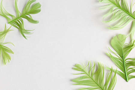 Beautiful green bird feathers on pastel background. Flat lay with copy space