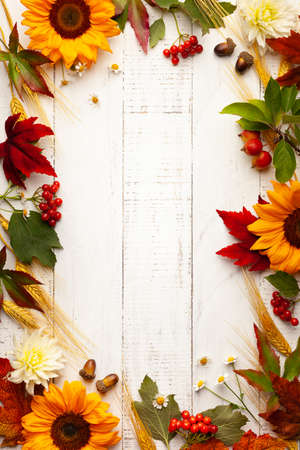 Autumn frame with wheat ears, sunflowers, leaves and berries on white wooden table. Flat lay, copy space. Concept of fall harvest or Thanksgiving day. 写真素材