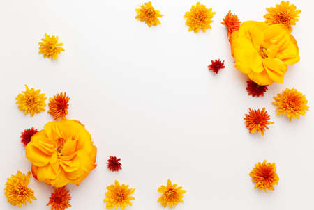 Autumn composition with colorful chrysanthemums and rose white background. Flat lay, copy space.