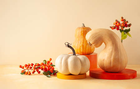 Modern still life with different sort of pumpkins, berries and leaves on colorful podiums. Autumn concept with food and geometric objects on pastel background with copy space. 写真素材