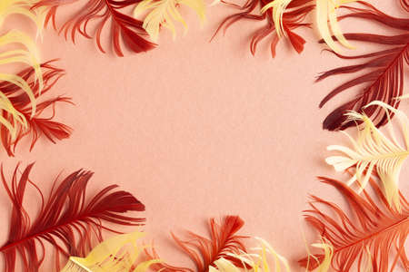 Beautiful red and yellow bird feathers on coral background. Flat lay with copy space 写真素材
