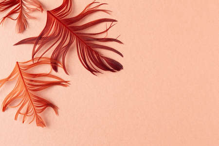 Beautiful red bird feathers on coral background. Flat lay with copy space