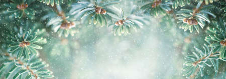 Beautiful snowy green fir tree branches close up. Christmas and winter concept. Soft focus, macro. 免版税图像